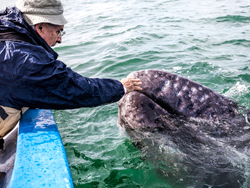 A man touching the nose of a whale in the ocean