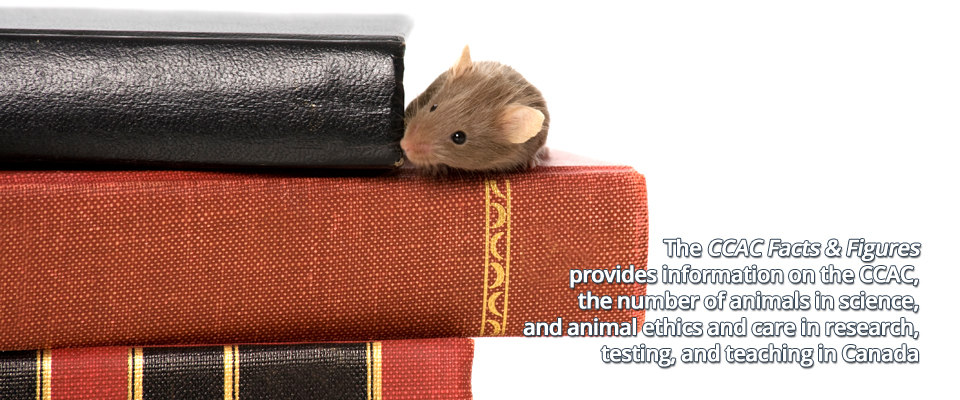 A mouse lying on a pile of books